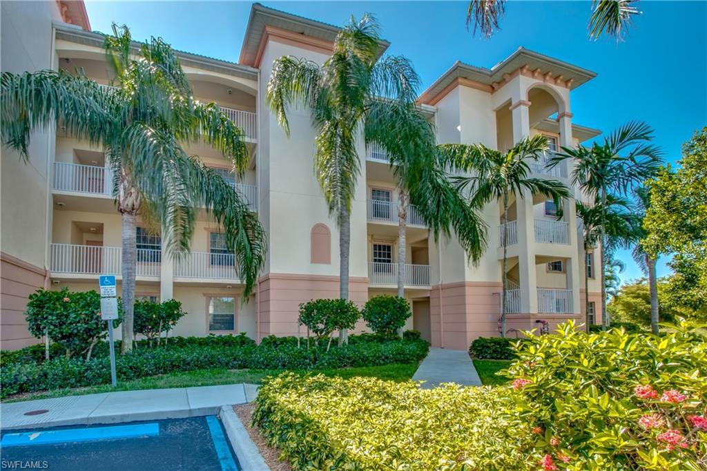 Palm Tree, Cape Coral, Florida