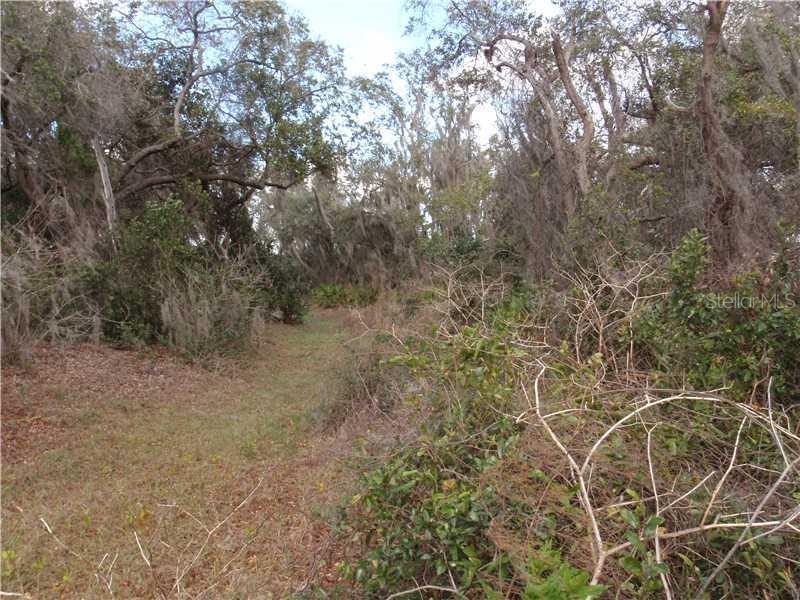 MARSH VIEW, CLERMONT, FL, 34711