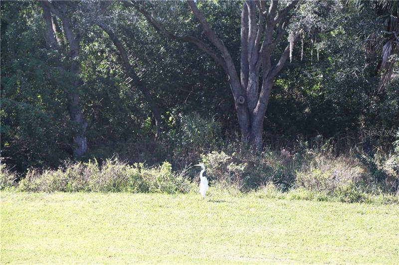 9100 N DR MARTIN LUTHER KING JR 1207, ST PETERSBURG, FL, 33702