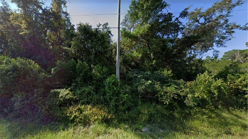 RANDEE,  NEW PORT RICHEY, FL