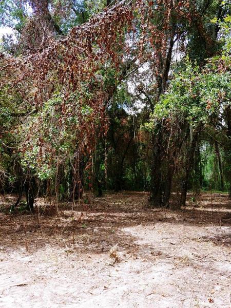 DOGWOOD, FRUITLAND PARK, FL, 34731