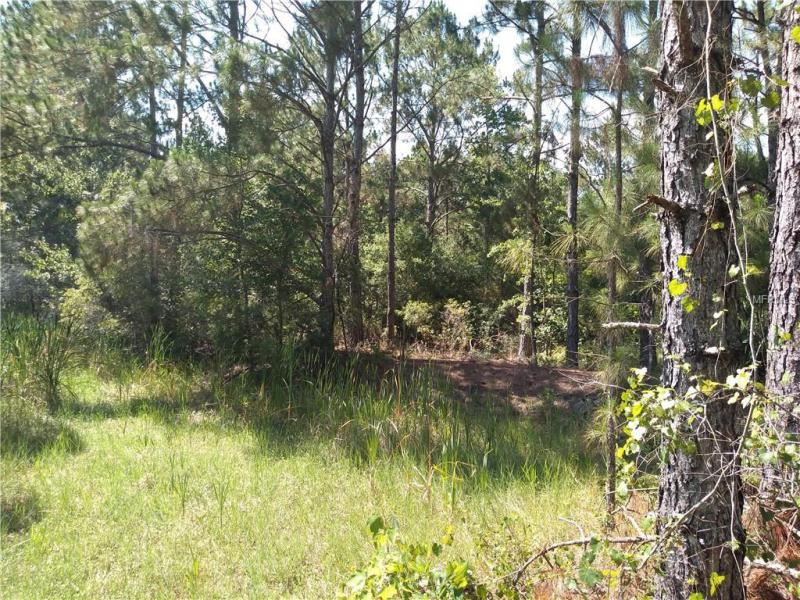 GREENGROVE, CLERMONT, FL, 34711