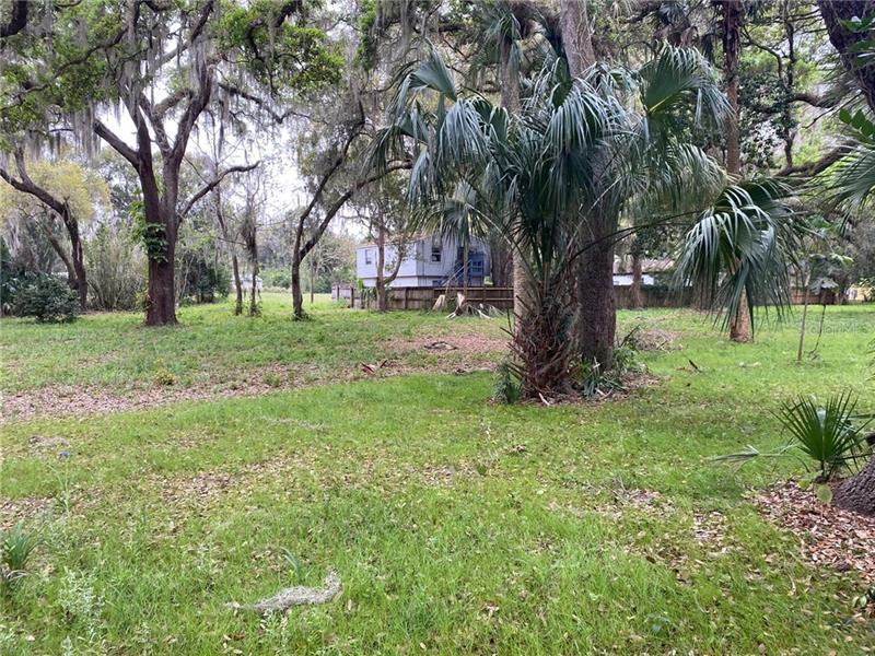 MULLBERRY, FRUITLAND PARK, FL, 34731