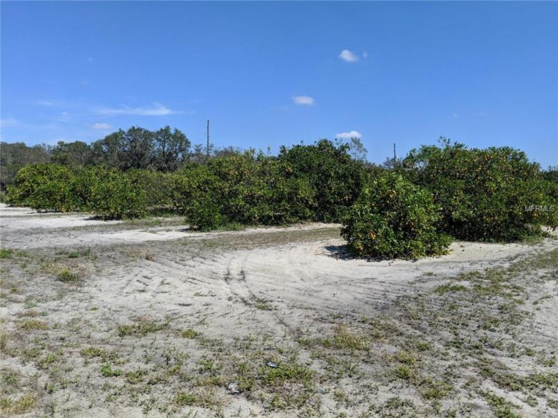 OTTO POLK, FROSTPROOF, FL, 33843