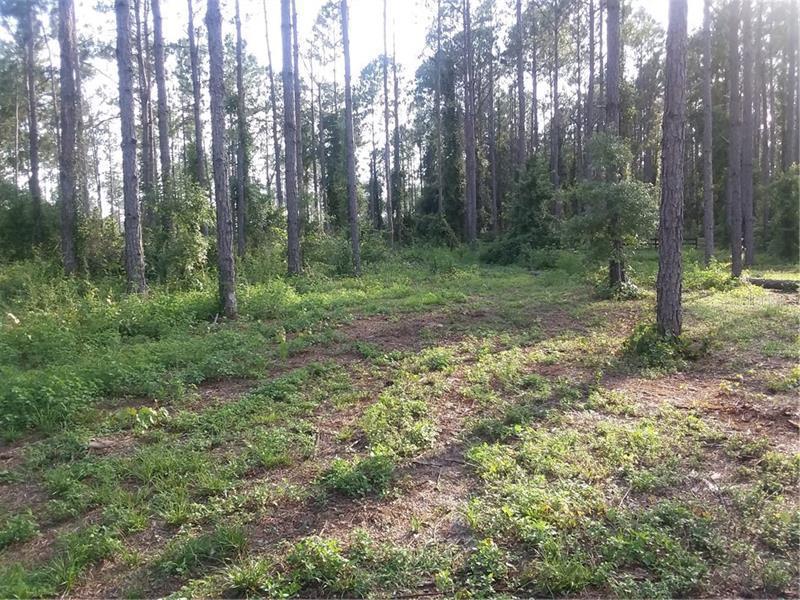 WILDFLOWER, CLERMONT, FL, 34711